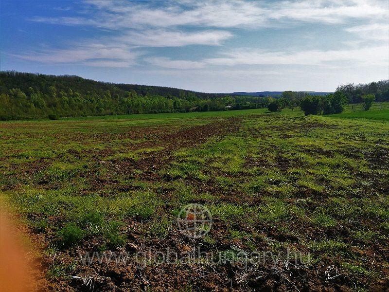 Üszögpusztai tónál 3,1 HA földterület eladó
