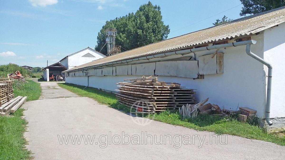 Pécs közeli, működő csirketartó telep