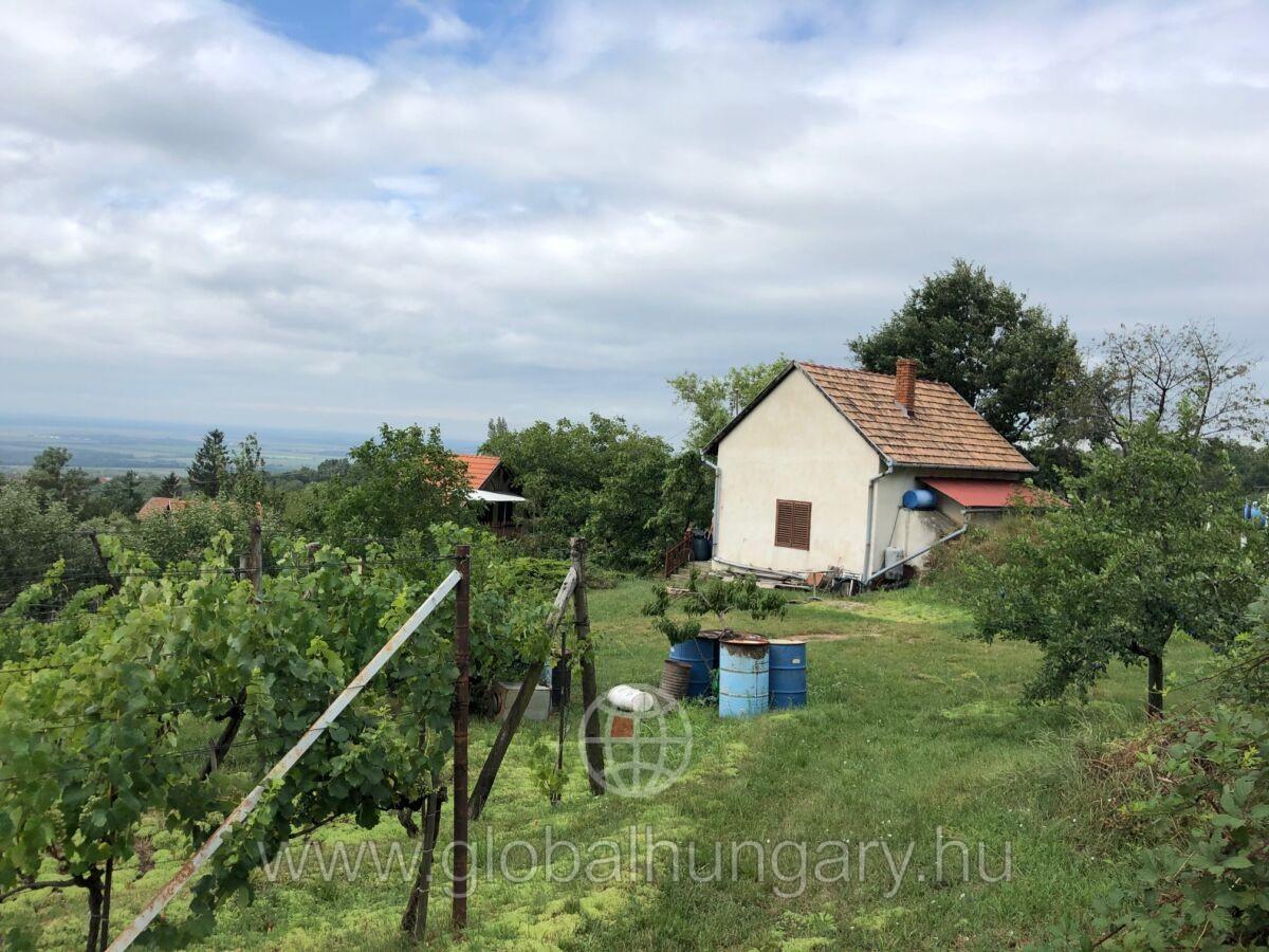 Kővágószőlősön, gyönyörű környezetben szőlő, tégla épülettel